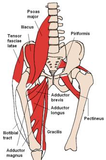 Sleeping Booty: Anterior Pelvic Tilt and Sleeping Butt Syndrome Part 2